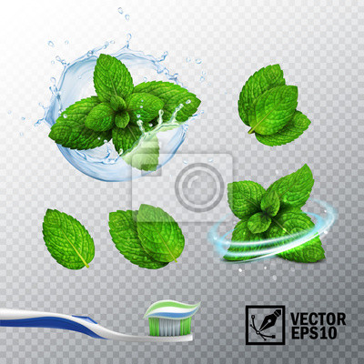 Sticker 3D realistic vector set, transparent splash of water with a mint sprout, various options for mint leaves, a fresh whirlwind, a toothbrush with a paste