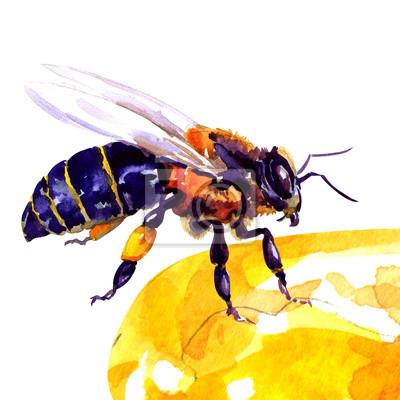 abeille, isolé sur blanc