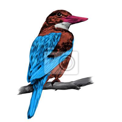 Alcyone Oiseau Assis Sur Une Branche Croquis Vecteur Graphique