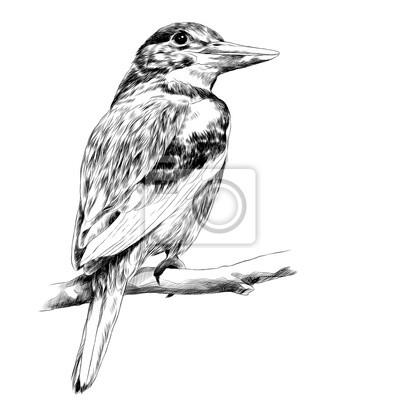 Sticker Alcyone Oiseau Assis Sur Une Esquisse De Branche Graphique Vecteur