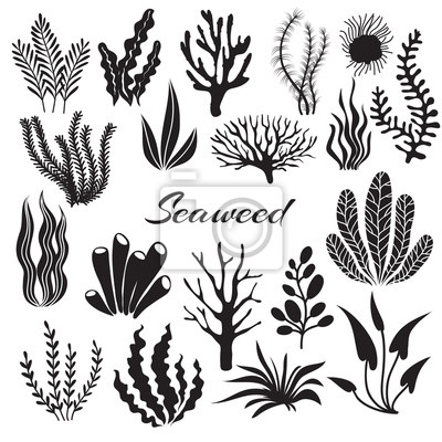 Sticker Algues d'aquarium. Plantes sous-marines, plantation d'océan. Jeu isolé de silhouette noire algues vectorielles. Mer, mauvaise herbe, illustration d'une plante océanique sous-marine