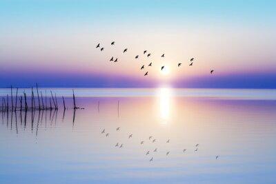 Sticker amanecer sobre el mar en calma