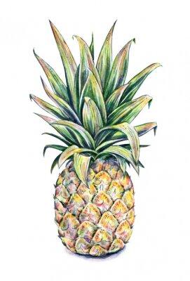 Sticker Ananas sur un fond blanc. Illustration d'aquarelle