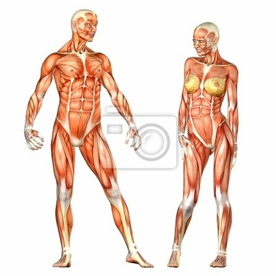 Anatomie Corps Humain Homme anatomie du corps humain - homme et femme stickers pc portable