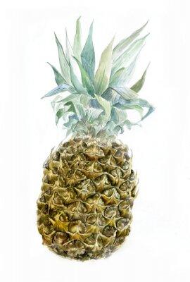Sticker Aquarelle, ananas, isolé, blanc