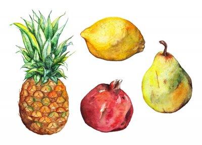 Sticker Aquarelle ananas pomegranate citron poire fruit ensemble