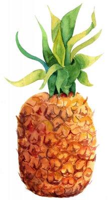Sticker Aquarelle ananas sur fond blanc