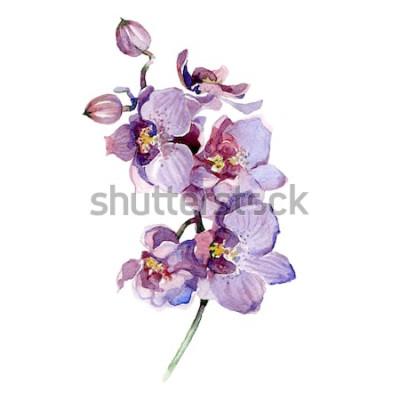 Sticker Aquarelle bouquet d'orchidée isolé sur fond blanc.