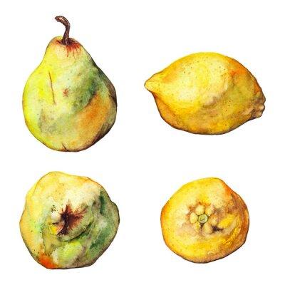 Sticker Aquarelle, citron, agrumes, poire, fruit, ensemble, isolé