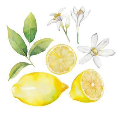 Sticker Aquarelle collection citron