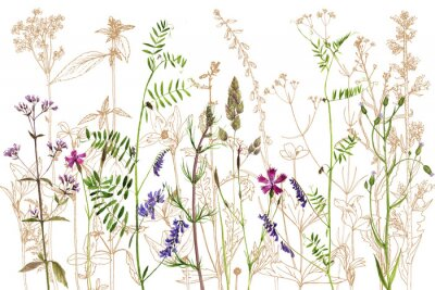Sticker aquarelle dessin fleurs et plantes