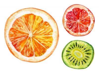 Sticker Aquarelle, ensemble, frais, orange, kiwi, pamplemousse
