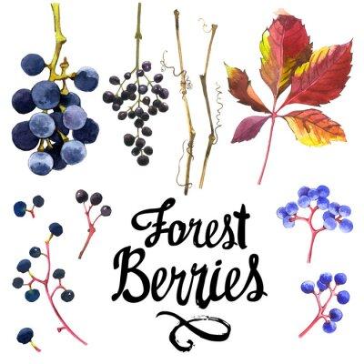 Sticker Aquarelle, ensemble, sauvage, raisins Collection de jardin d'herbier.