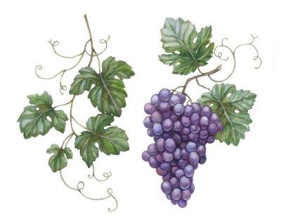 Sticker Aquarelle illustration de raisin avec des feuilles