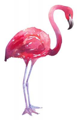 Sticker Aquarelle, illustration, flamant