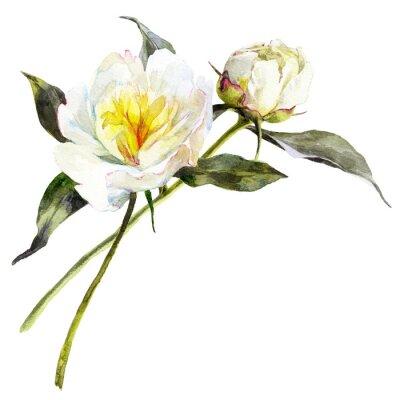 Sticker Aquarelle isolé bouquet de pivoines blanches avec des feuilles.