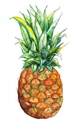 Sticker Aquarelle, main, dessiné, ananas, exotique, tropique, fruit, isolé