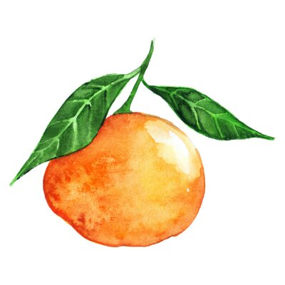 Sticker Aquarelle, mûre, orange, mandarine, agrumes, isolé