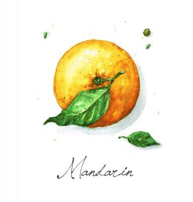 Sticker Aquarelle Peinture alimentaire - Mandarine ou Orange