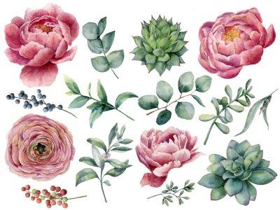 Sticker Aquarelle pivoine, ensemble floral succulent et renoncule. Baies rouges et bleues peintes à la main, feuilles d'eucalyptus isolés sur fond blanc. Illustration pour la conception, imprimer.