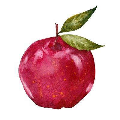 Sticker aquarelle pomme rouge