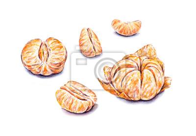 Aquarelle Ripe tangerines pelées. Set pour la conception.
