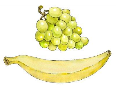 Sticker Aquarelle sur papier d'un ensemble de fruits: raisins et la banane