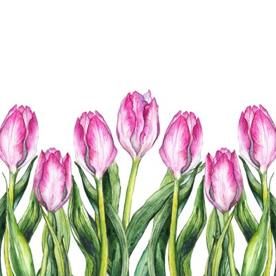 Sticker Aquarelle, tulipe rose, fleur, cadre de bordure de la nature