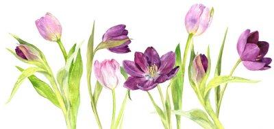 Sticker Aquarelle tulipes violet et rose