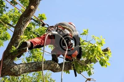 Sticker arboriculteur 12