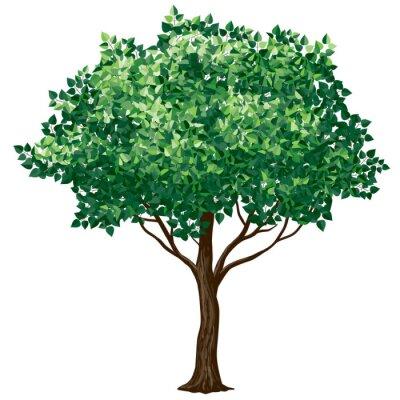 Sticker Arbre à feuilles