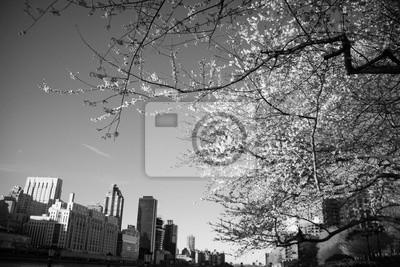 Arbre à fleurs de cerisier et bâtiments en style noir et blanc, New York