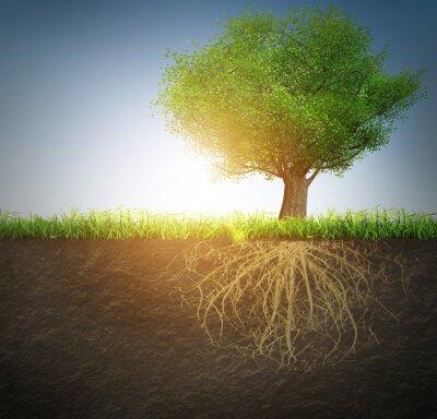 Sticker arbre avec des racines