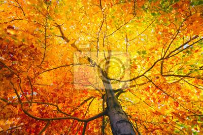 Sticker Arbre, coloré, feuilles, automne