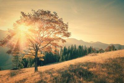 Sticker Arbre d'automne et chaud rayon de soleil paysage de jour en Vintage tonique