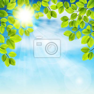 arbre d'été