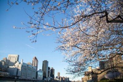 Arbre de fleur de cerisier et bâtiments à New York