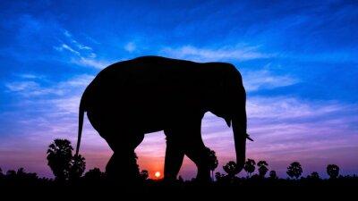 Sticker Arbre Elephant andpPalm à temps crépuscule