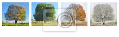 Sticker arbre seul dans quatre saisons