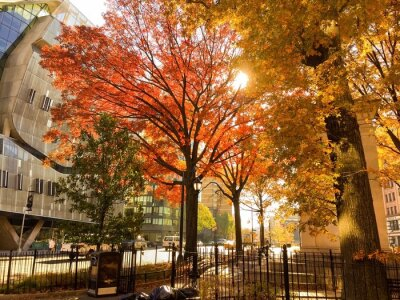 arbres au parc en automne vintage, New York