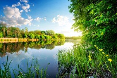 Arbres de rivière calme