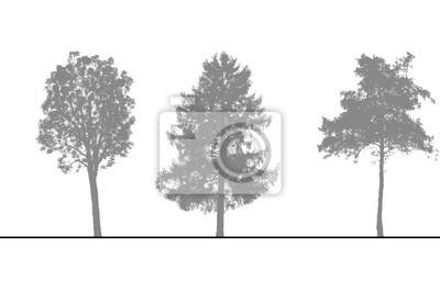 Sticker arbres verser Coupes et Élévations