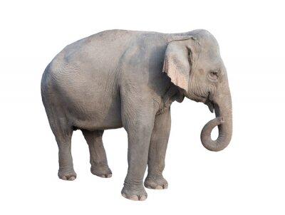 Sticker asie éléphant