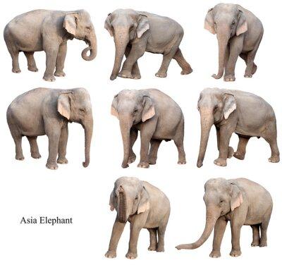 Sticker asie éléphant femelle isolé