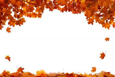 Sticker Autumn colored falling maple leaves isolated on white background