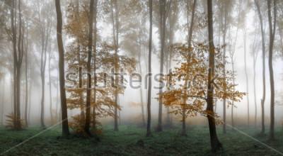 Sticker Autumn foggy forest. Balkan Mountains, Bulgaria.