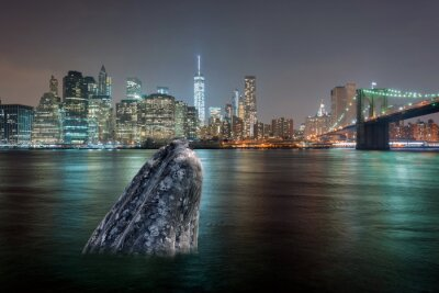 Sticker Baleine, manhattan, rivière, nuit