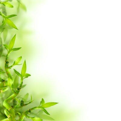 Sticker Bambou et des feuilles vertes, fond