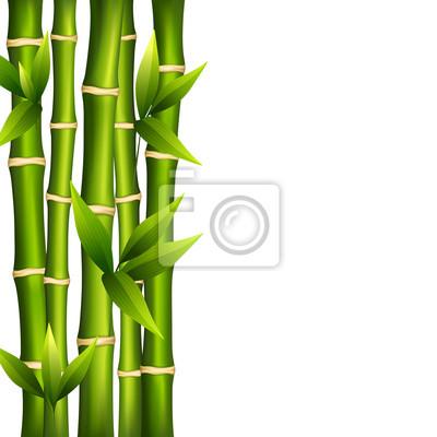 Bambou sur un fond blanc