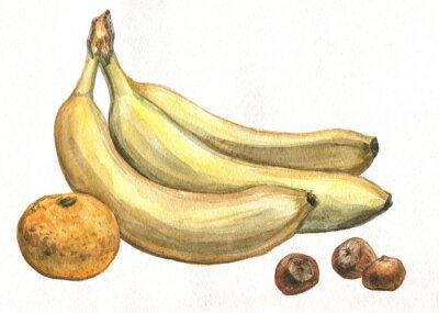 Sticker Banane, mandarine et noisettes. La peinture à l'aquarelle